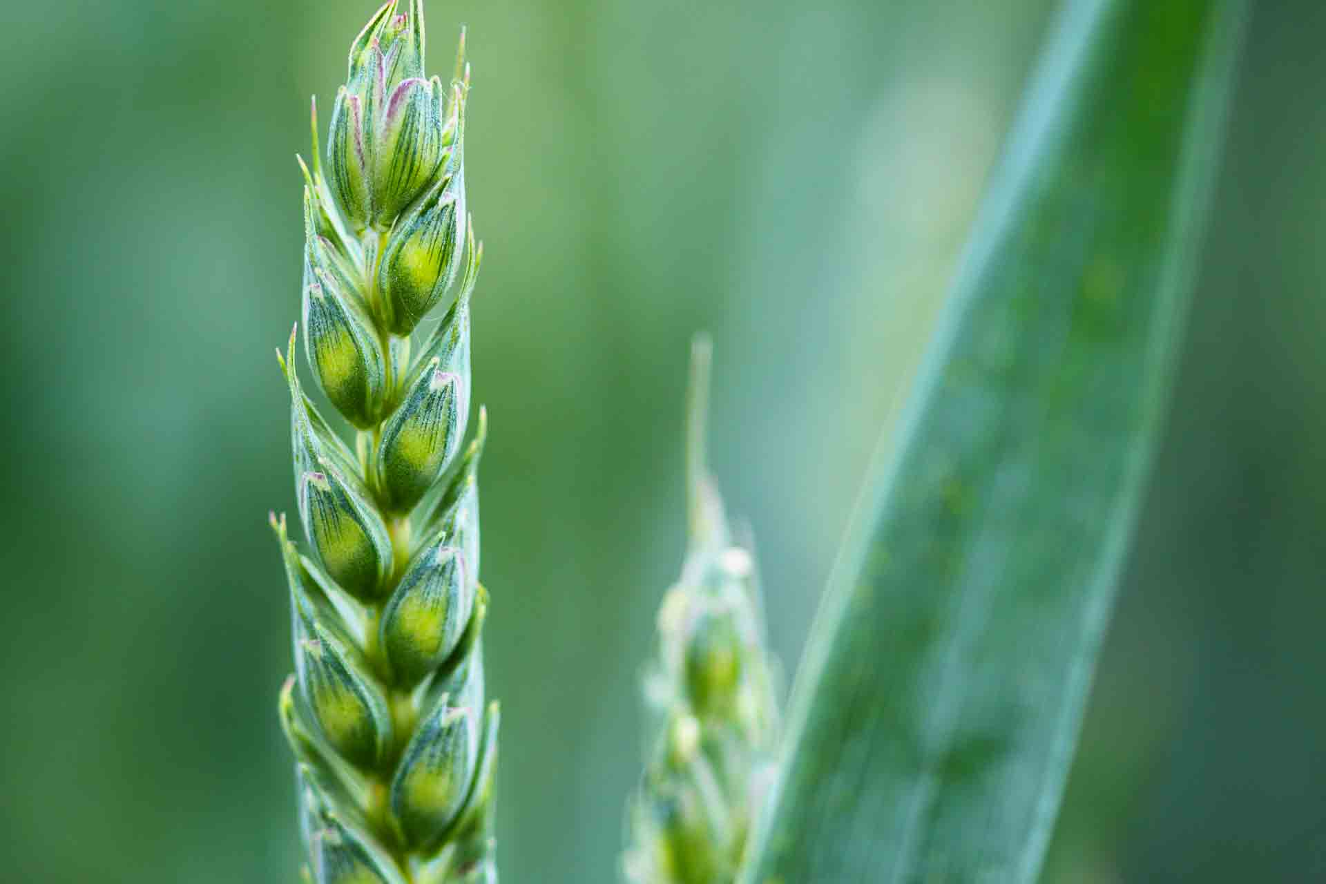 agriculture-2229_1920